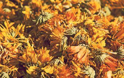 Gandha🌿 Herbolaria consciente y artesanal